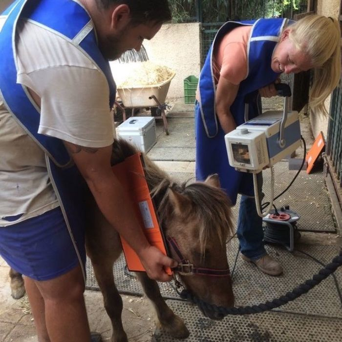 When Police Found an Abonded Horse They Couldnt Understand Why He Wont Move
