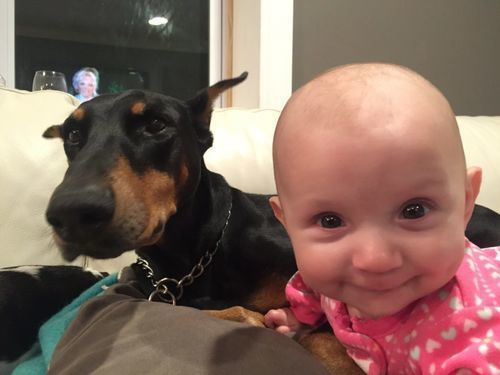 Family Dog Grabs Baby By Its Diaper, Then Mom Sees the Surprising Reason Why