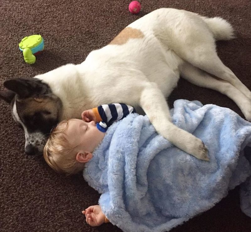 Her Dog Didnt Stop Barking at Her Pregnant Belly, Then She Realized Why