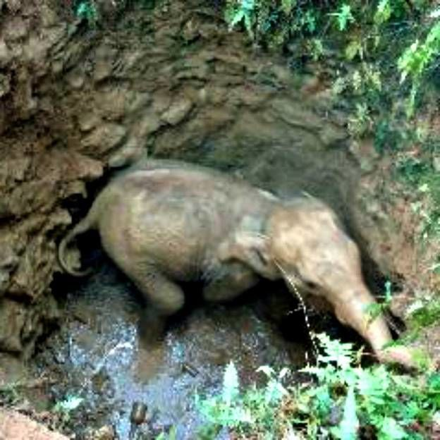 This Elephant Calf Was on the Brink of Death Until Guardian Angels Came to Help
