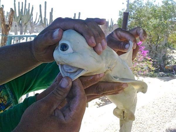 Strange FishFrilled Shark that exist!  190814_085851_10
