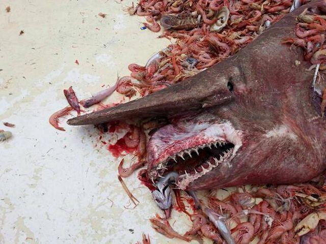 Strange FishFrilled Shark that exist!  190814_085851_4