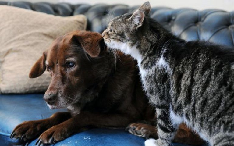 A Friendship Between a Blind Farm Dog and a Bully Cat Thats Breaking the Common Stereotype