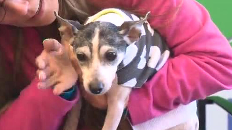 This Florida woman lost her dog in 2007. They were finally reunited when  she turned up in Pittsburgh